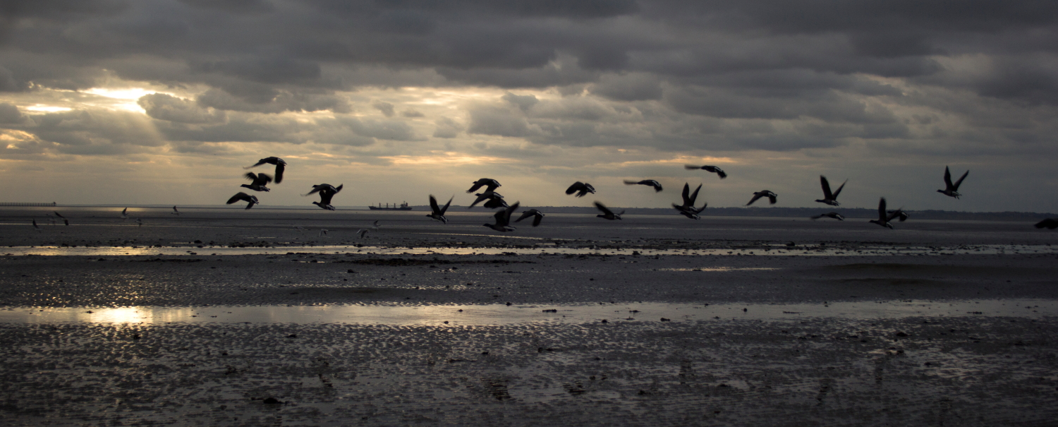 A group of birds flying over the Thames Estuary at low tide